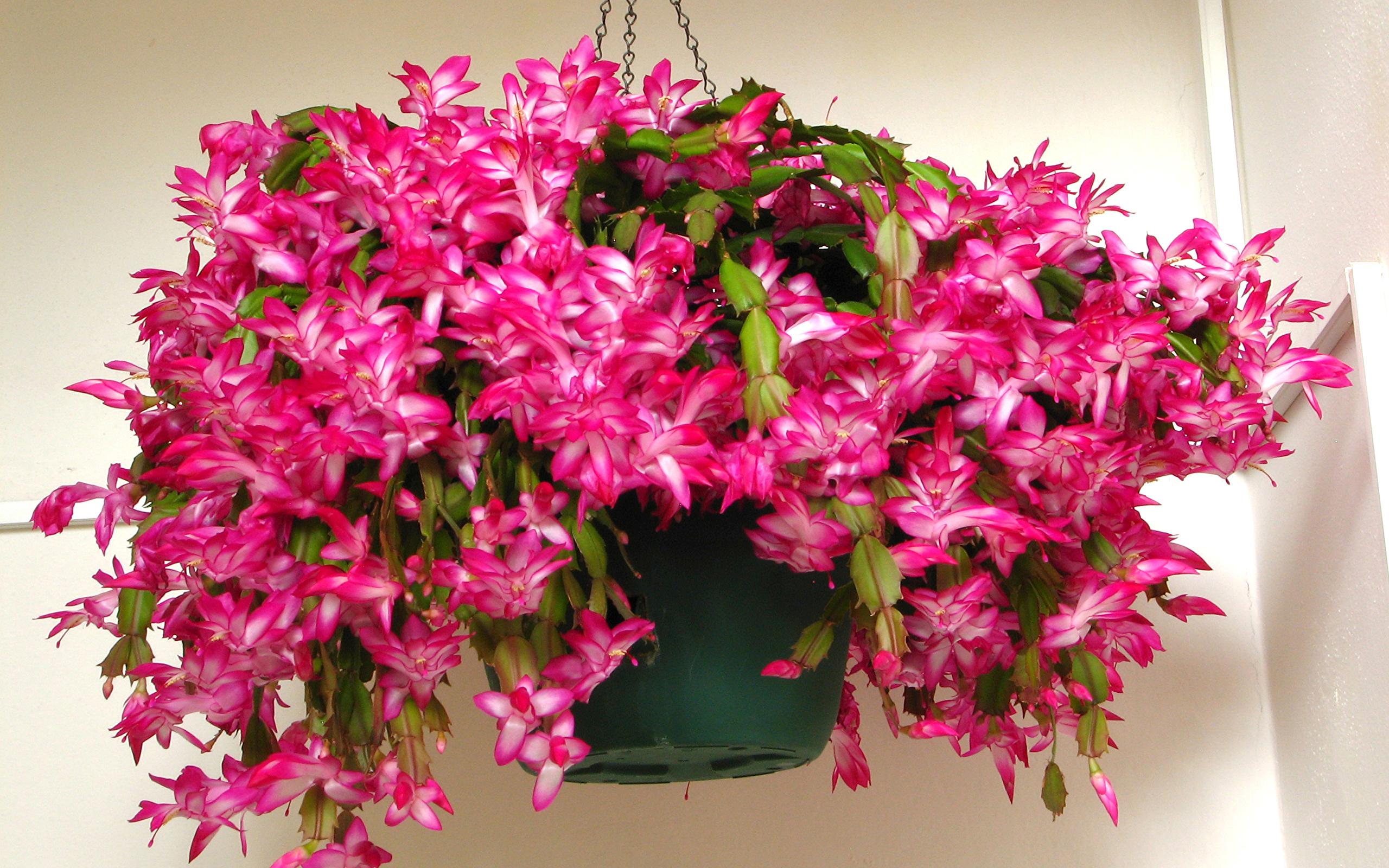 как самые красивые комнатные цветы фото с названиями способ