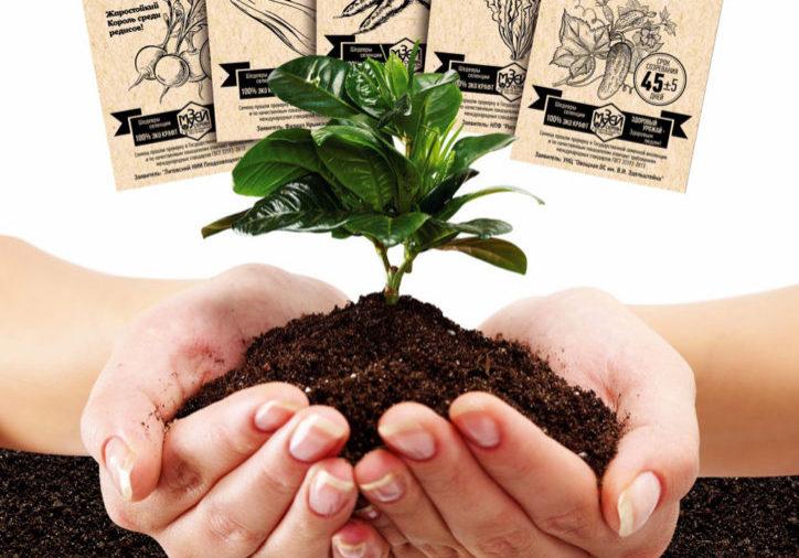 Семена Эко крафт от музея семян