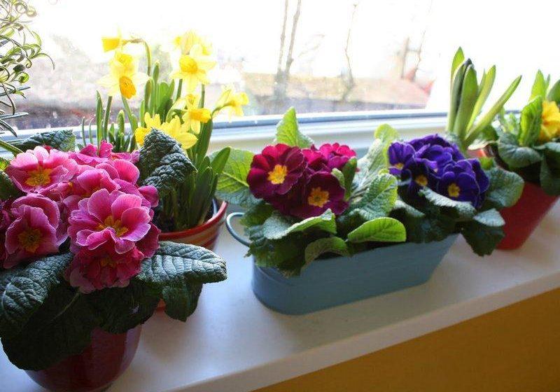 Какие комнатные растения зацветают зимой