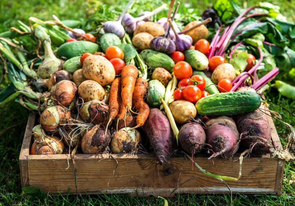Как сохранить овощи свежими до весны.