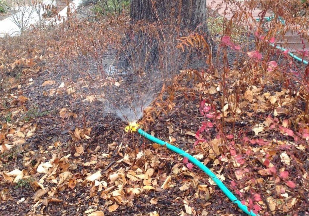 Как поливать плодовые деревья осенью